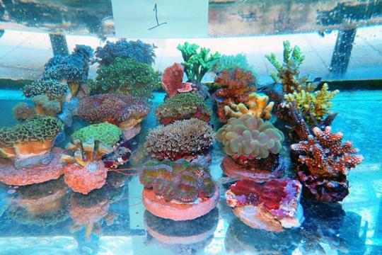 WYSIWYG BOX 1 - Coral mix 1