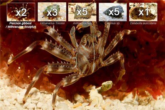Kit detritivores sélection mangeurs d'algues -15 pcs